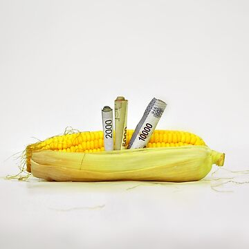 Corn Investation by fatrin99
