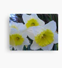 Sunny Daffodils Canvas Print