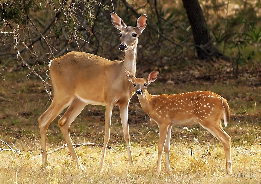 Quot Mama And Baby Deer Quot By Kellimays Redbubble