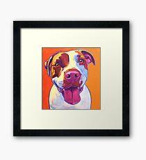 Happy Pit Bull - Slobbery Smiling Colorful Pitbull Dog Framed Print