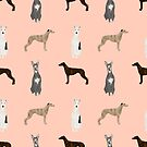 Whippet dog breed pet portrait whippets pure breed dog gifts by PetFriendly