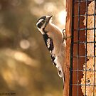 Suet Time by Christianne Gerstner