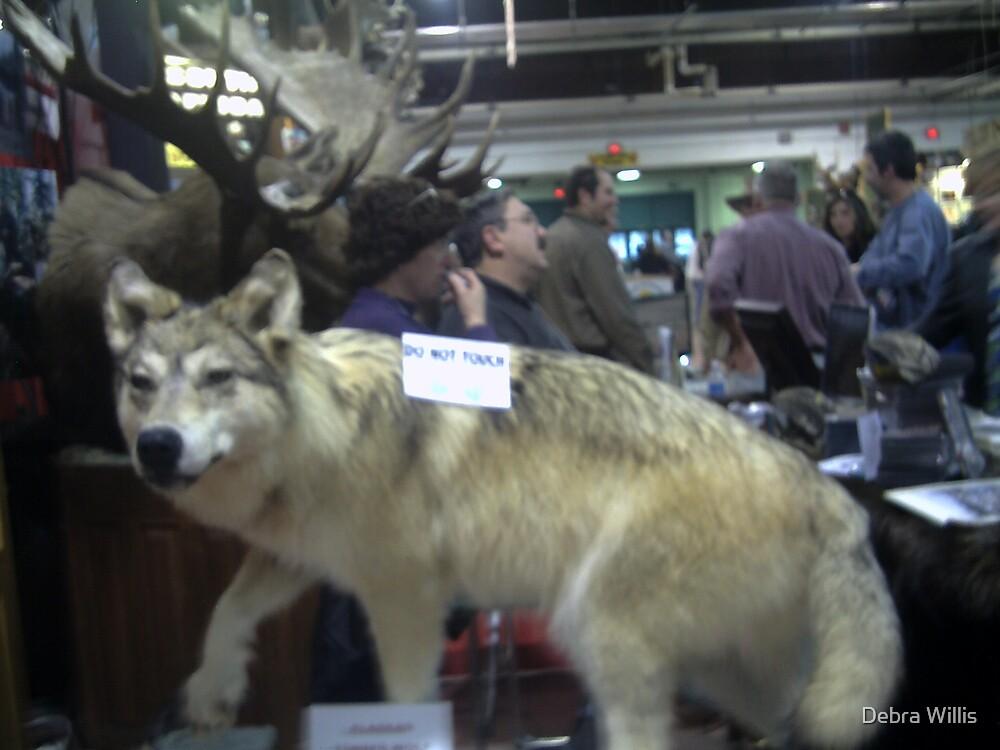 ALASKAN TIMBER WOLF by Debra Willis