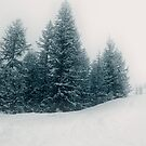 Snow storm by Steve plowman