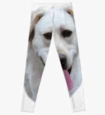 Young Yellow Labrador Retriever Portrait Leggings