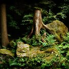 Forest Stump by Modified