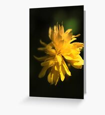 Beautiful Yellow Flower in Full Bloom Greeting Card