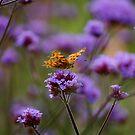 Tiny Wings by elasticemma