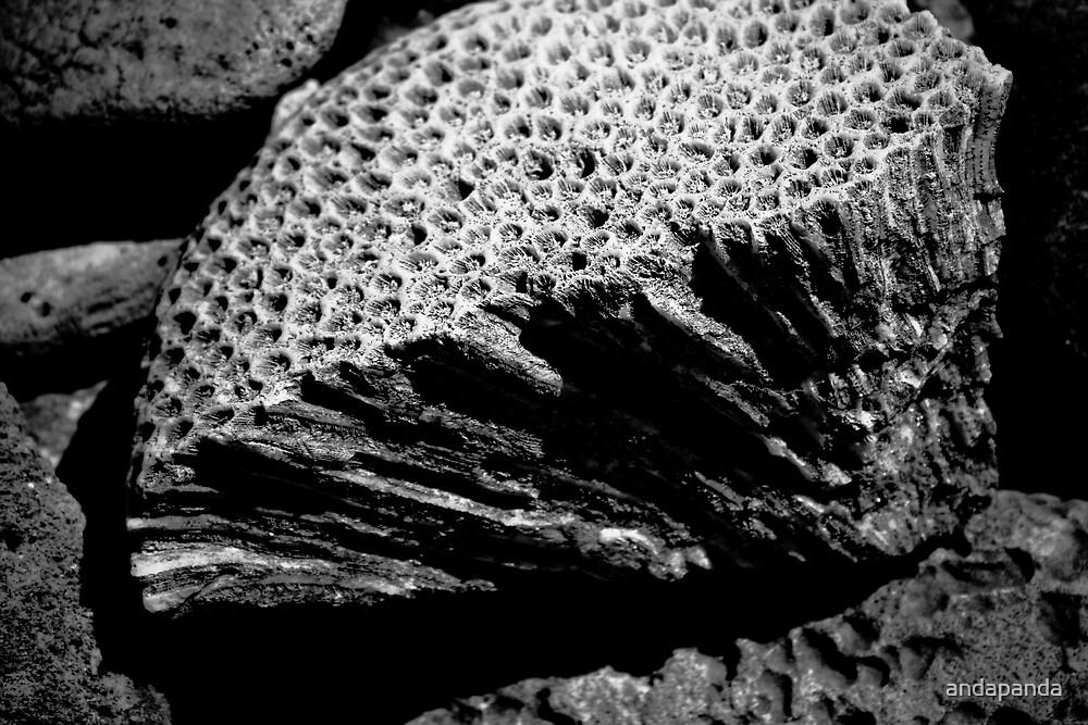 Sponge Rock by andapanda