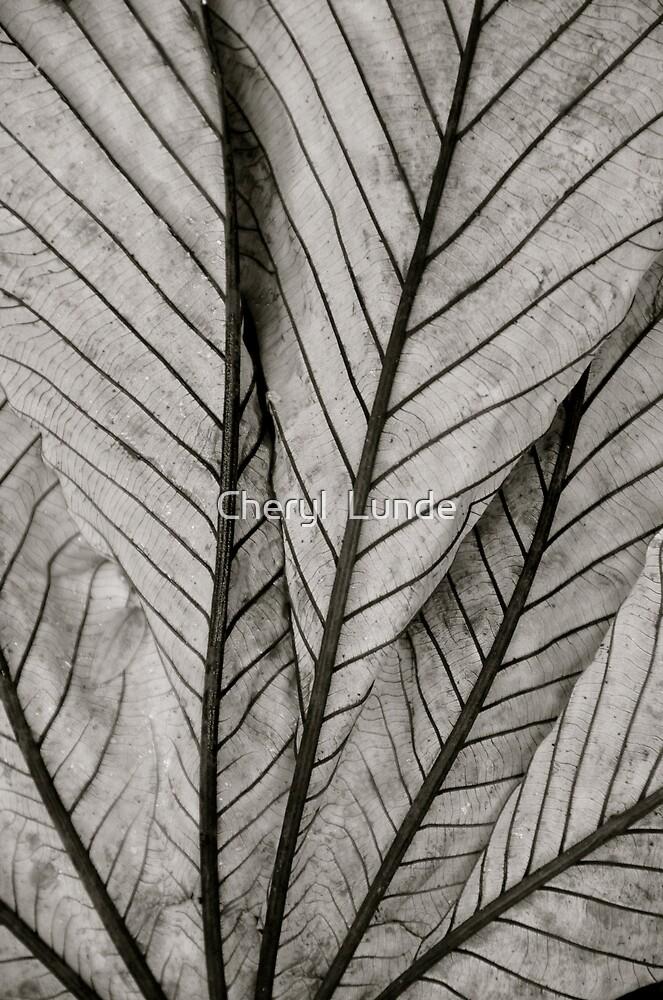 Fallen Leaf by Cheryl  Lunde