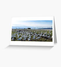 Snow Geese Twenty One Greeting Card