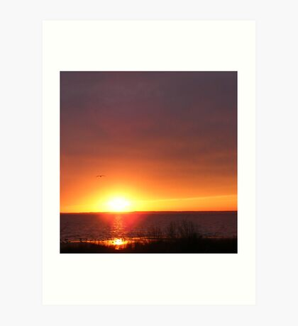 Gull Sunset cropped Art Print