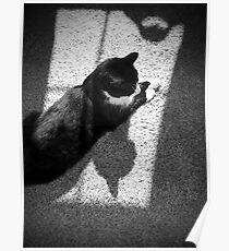 Cat Shadows Poster