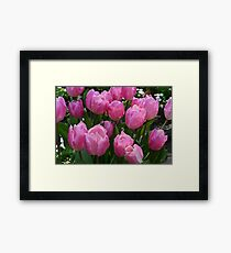 Pretty spring pink purple tulip  flowers. floral garden photography. Framed Print