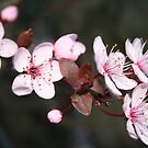 Full blooms  by Ruth Varenica