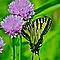 *Avatar/Butterfly - Gorgeous Flower Cards*