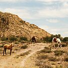Horses in Loreto Zacatecas Mexico by Kaylene B