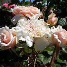 Rose 11 by Beverley  Johnston