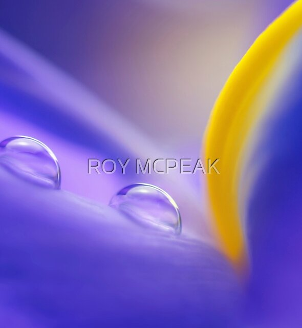 Iris Drops by peaky40
