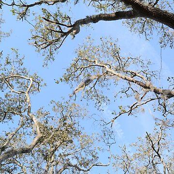 Skyward Branches by TangerineKiki