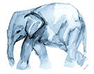 Elephant Sketch in Blue by Kendra Shedenhelm