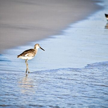 Sandpiper By the Waves by OutOftheInkwell