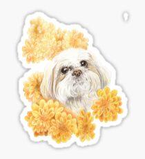 Miss Shih Tzu Sticker