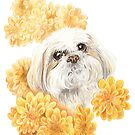 Miss Shih Tzu by Ellie Jordan