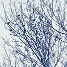 Starlings in a Tree - Cyanotype Effect by Artberry