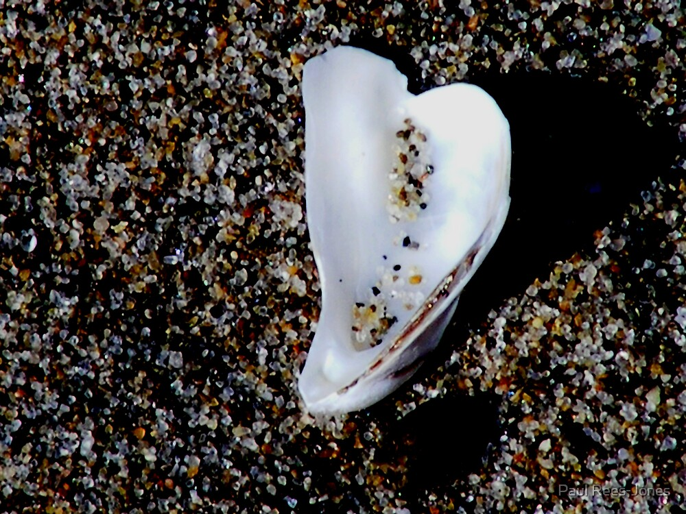 Shell and Sand. by Paul Rees-Jones
