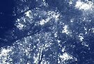 Up in the Trees - Cyanotype Effect by Artberry