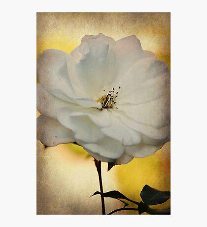 Fragile Beauty Photographic Print