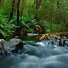 Yarra River Cascades by Phillip Smith Photography