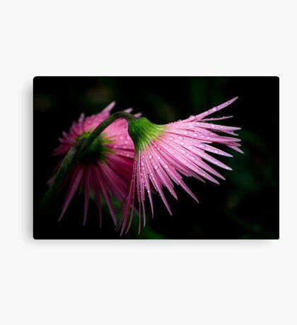 Pink Gerber Canvas Print