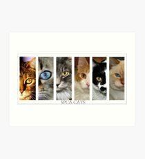 spca cats Art Print