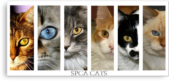 spca cats by Susanne Correa