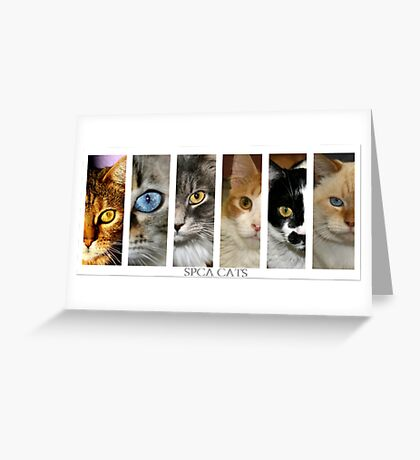 spca cats Greeting Card