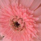 pink by sneha