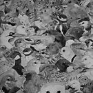 British Birds B/W by pokegirl93