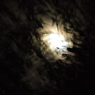 Night through the gum by Greg  Francis