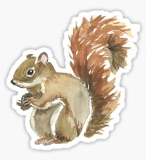 Cute Squirrel Design Sticker