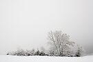 White landscape by Patrick Morand