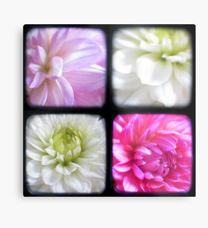 Dahlias Through The Viewfinder (TTV) Metal Print