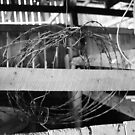 Barbed Wire Coil in Barn by Hickoryhill
