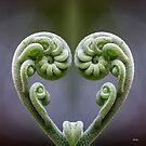 At the Heart by Iris MacKenzie