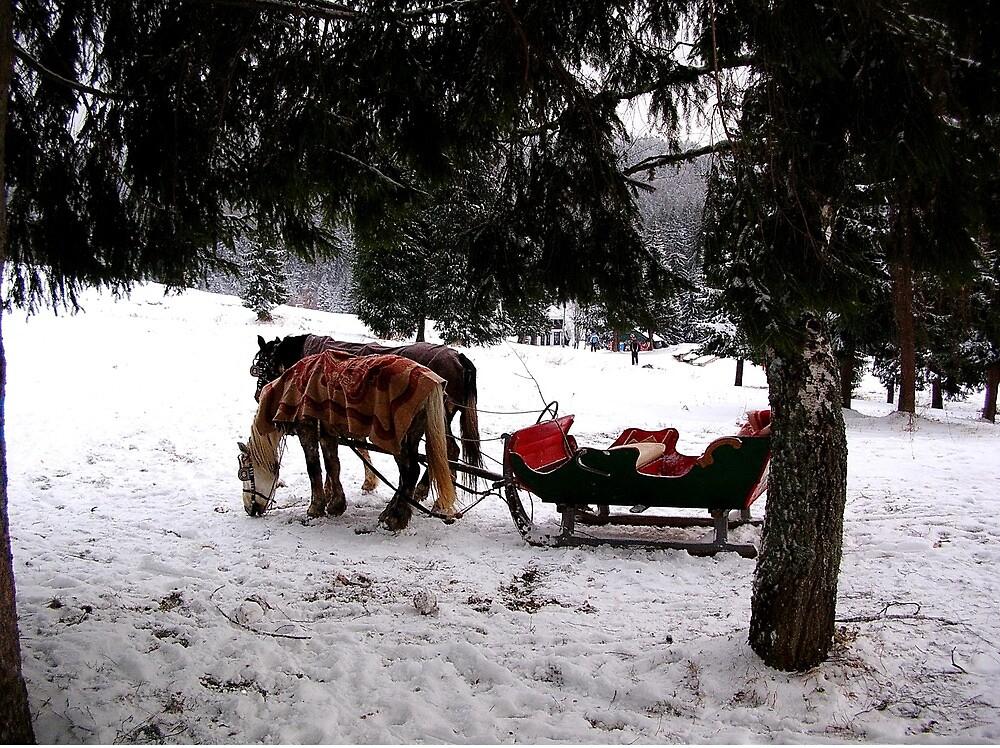 Winter on Mount Tara by Ana Belaj