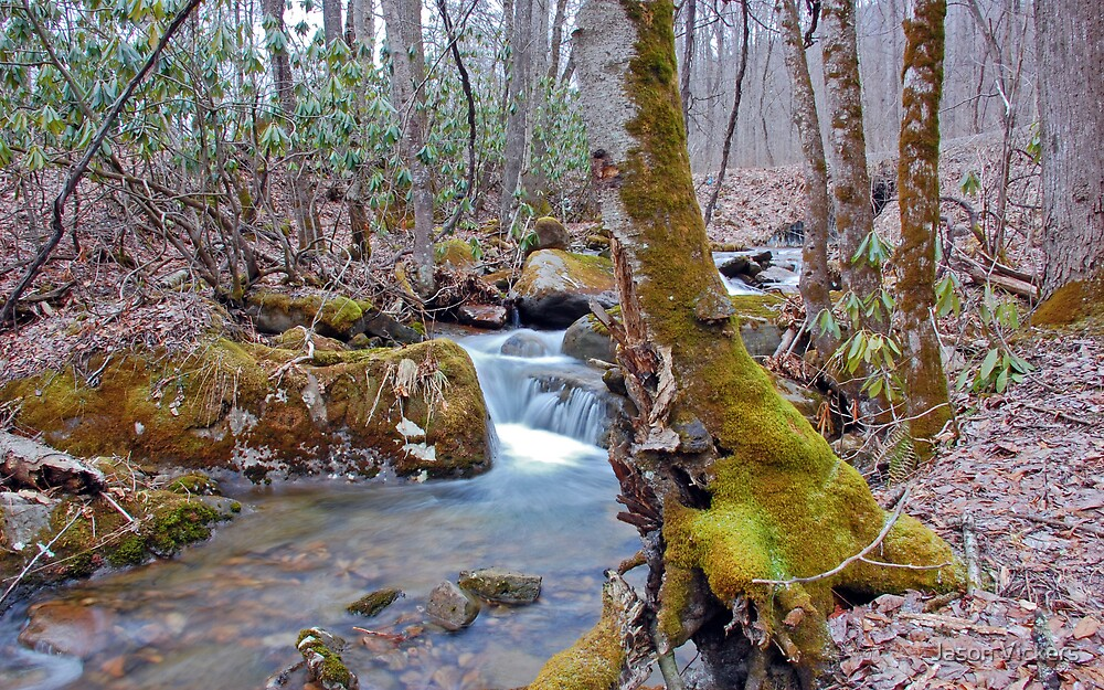 Monongahela Stream by Jason Vickers