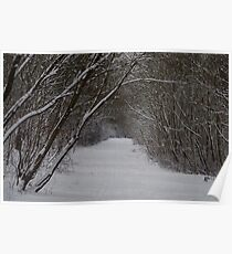 snow uk 2018 tree tunnel beast from the east  Poster