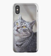 Neighborhood Cat iPhone Case