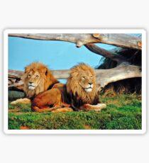 Lions. Sticker